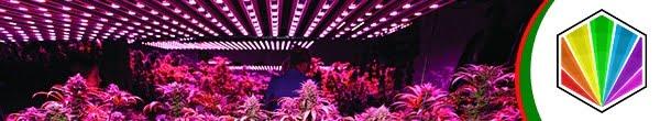 fs grow lights