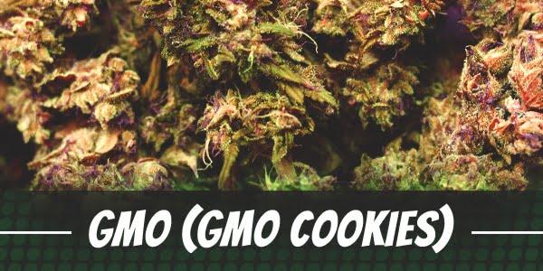 GMO Strain (GMO Cookies)