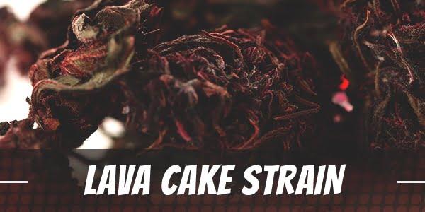 Lava Cake Strain
