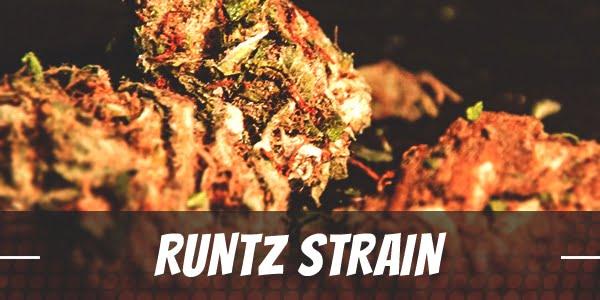 Runtz Strain Review