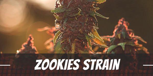 Zookies Strain