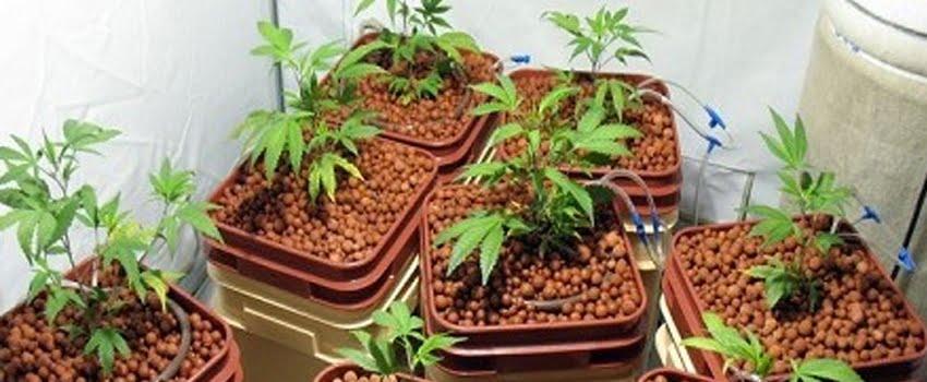 Planting medium