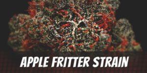 Apple Fritter Strain