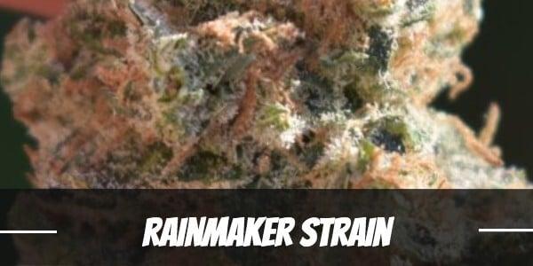 Rainmaker Strain Review