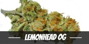Lemonhead OG Strain