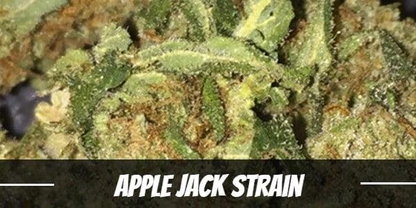 Apple Jack Strain