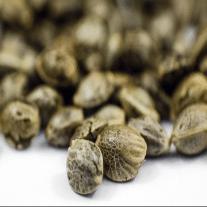 Beginner Seeds