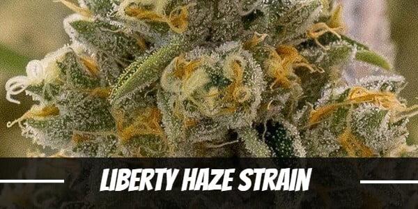 Liberty Haze Strain
