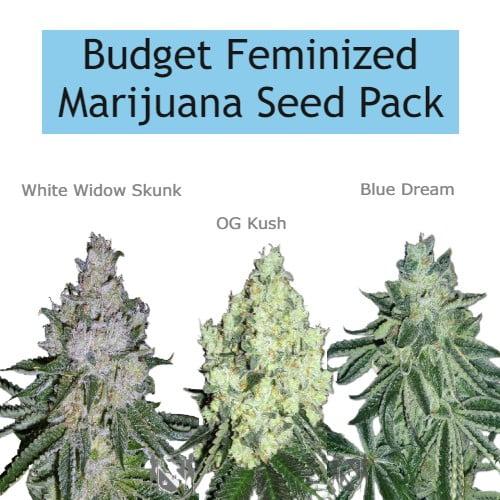 MSNL - Budget Feminized Marijuana Seed Pack