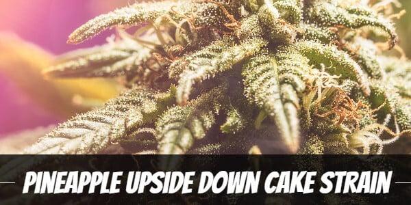 Pineapple Upside Down Cake Strain