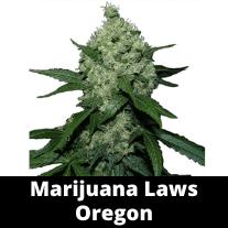 Marijuana Laws Oregon