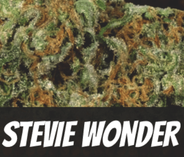 Stevie Wonder Strain