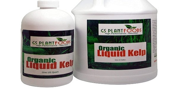Kelp concentrate