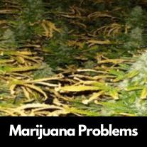 Marijuana Problems