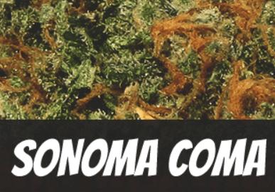 Sonoma Coma Strain