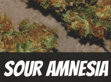 Sour Amnesia Strain