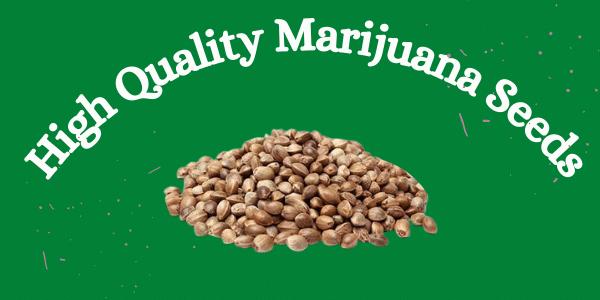 Quality Marijuana Seeds