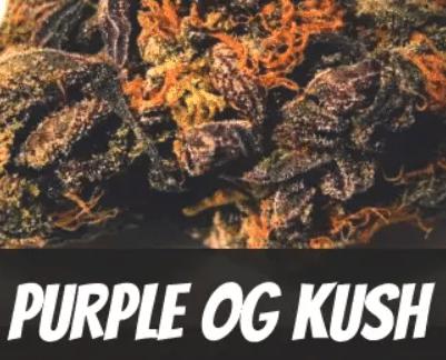 Purple OG Kush