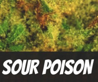 Sour Poison