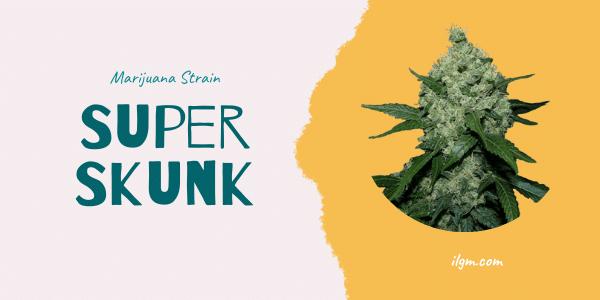 Super Skunk Strain