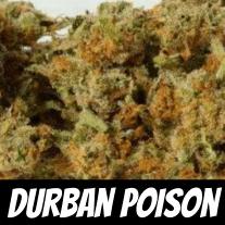 Durban Poison Strain