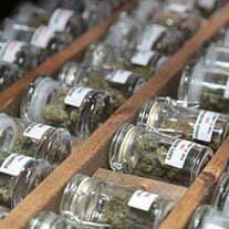 marijuana in california grow store
