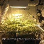 Cannabis lighting types