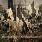 Fire indoor marijuana garden