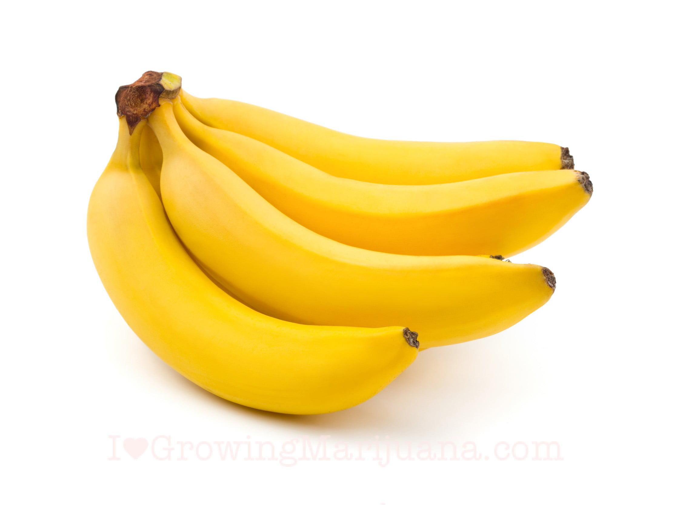 Cannabis bananas