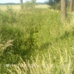Marijuana growing beware trails