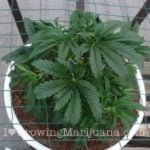 Marijuana co2 bomb how to make