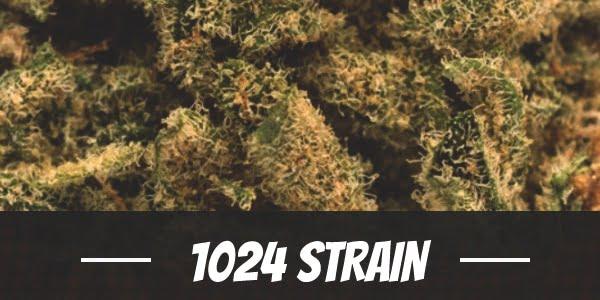 1024 Strain