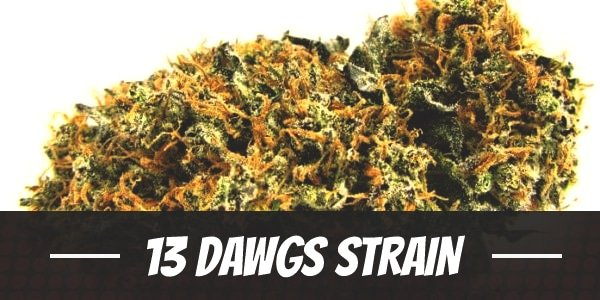 13 Dawgs Strain