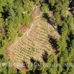 Marijuana police aerial observation