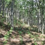cannabis hidden trees