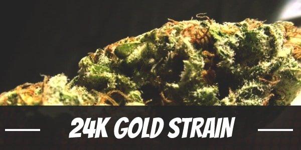 24K Gold Strain