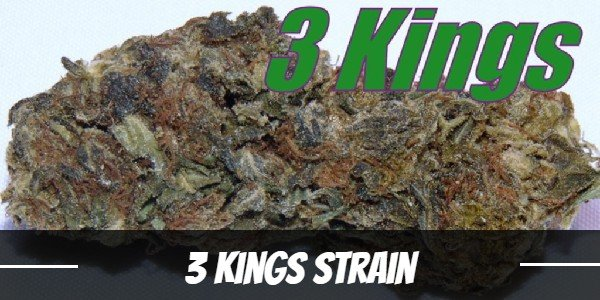 3 Kings Strain