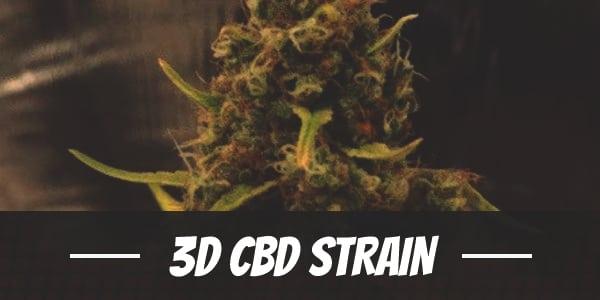 3D CBD Strain