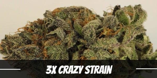 3X Crazy Strain