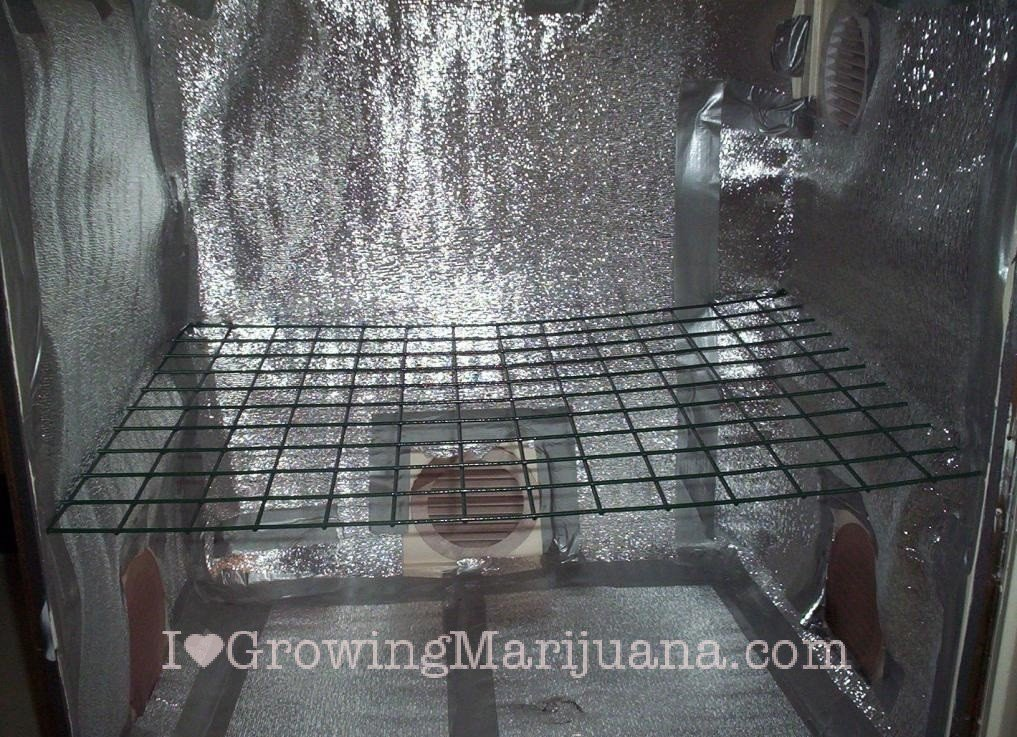 Distance scrog screen at 25 inch