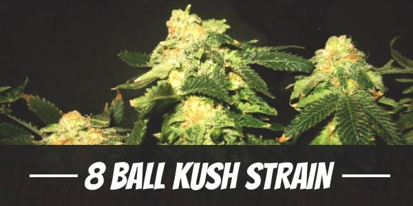 8 Ball Kush Strain