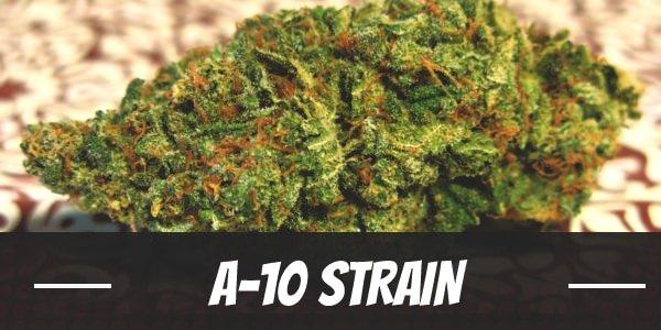 A-10 Strain