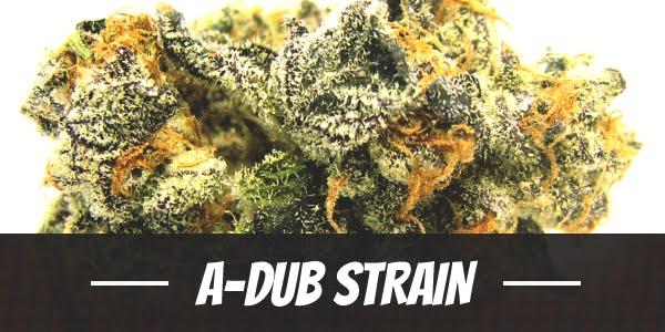 A-Dub Strain