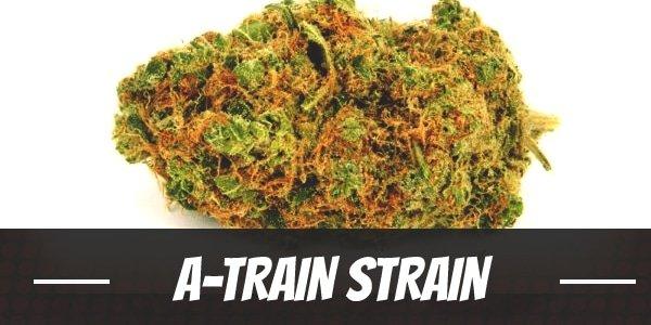 A-Train Strain