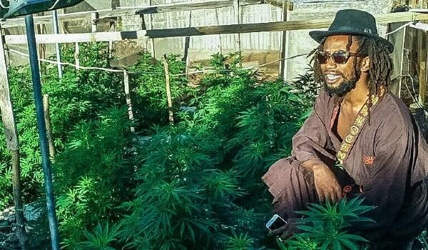 A weed garden in Jamaica