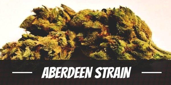 Aberdeen Strain