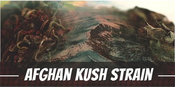 Afghan Kush Strain