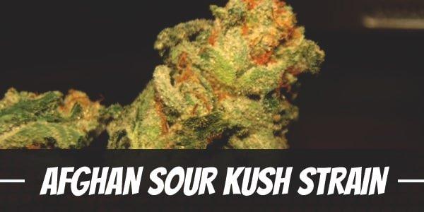 Afghan Sour Kush Strain