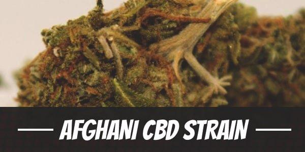 Afghani CBD Strain