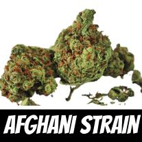 Afghani Strain